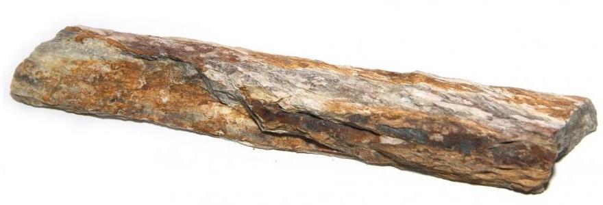 Большой кусок окаменевшего дерева